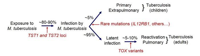 Variability in tuberculosis phenotypes